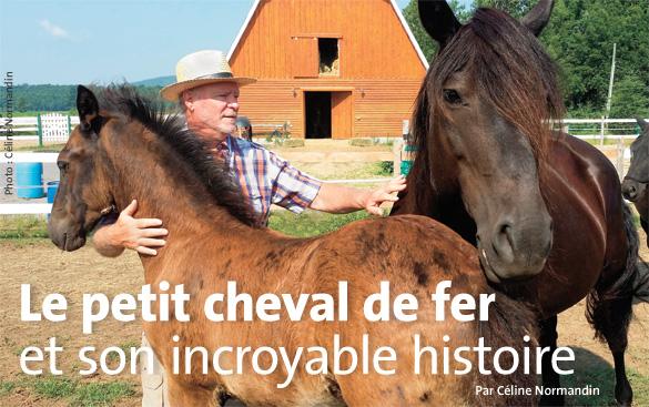 Cheval-Petit-Cheval-de-Fer-10-2014